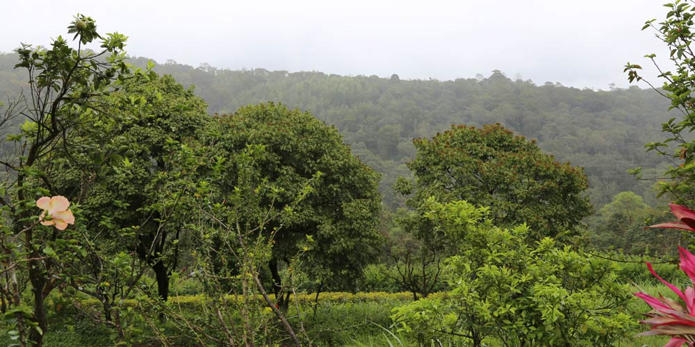 coorg-4